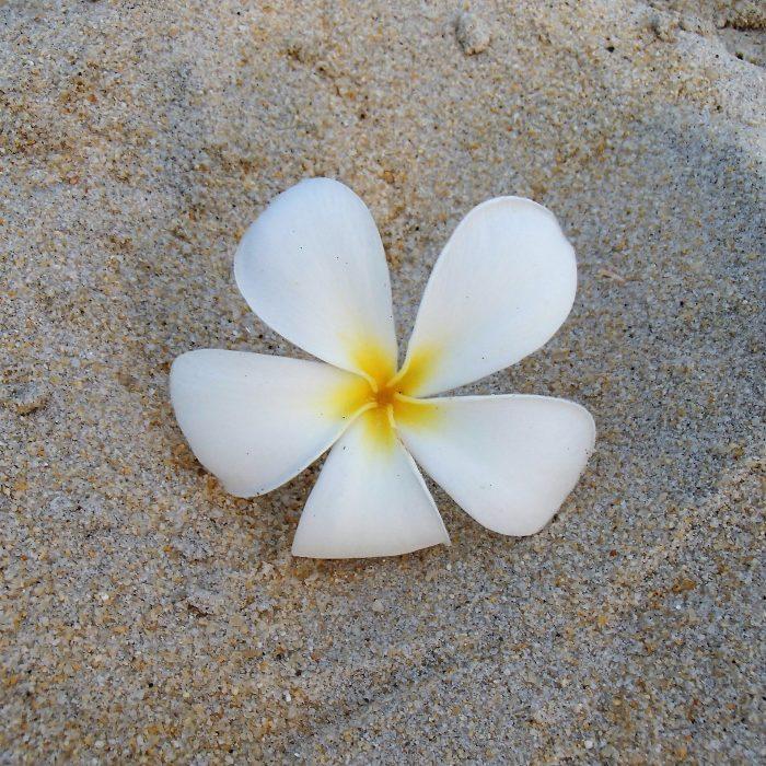 langkawi flower