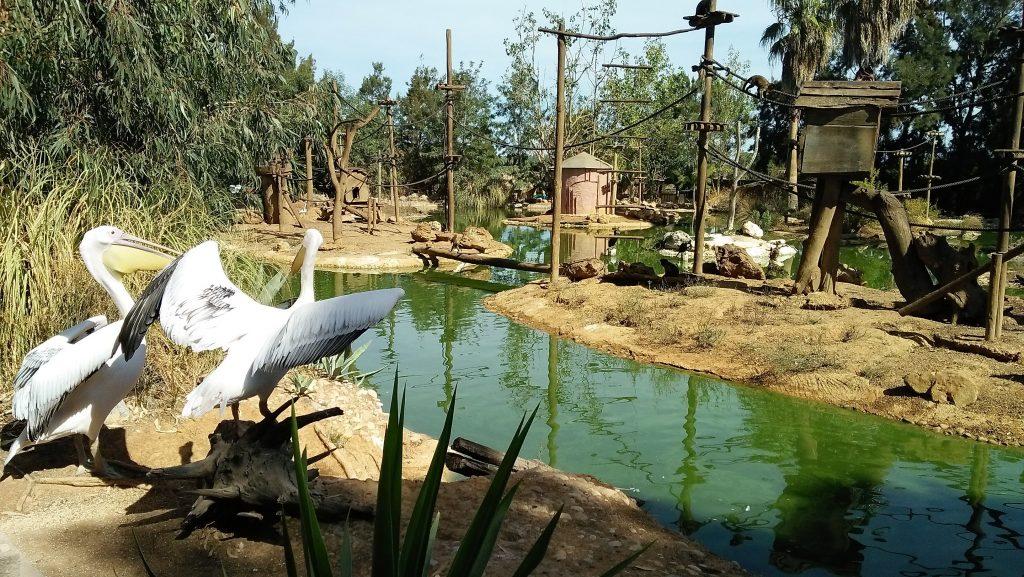 zoo de lagos foto