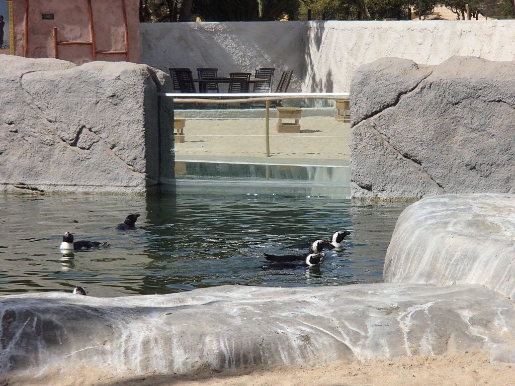 pinguins zoo lagos